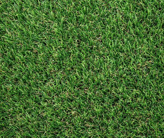 Edel Grass Benelux 40 full view